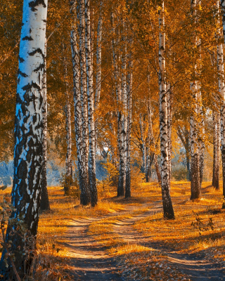 Free Autumn Forest in October Picture for 240x320