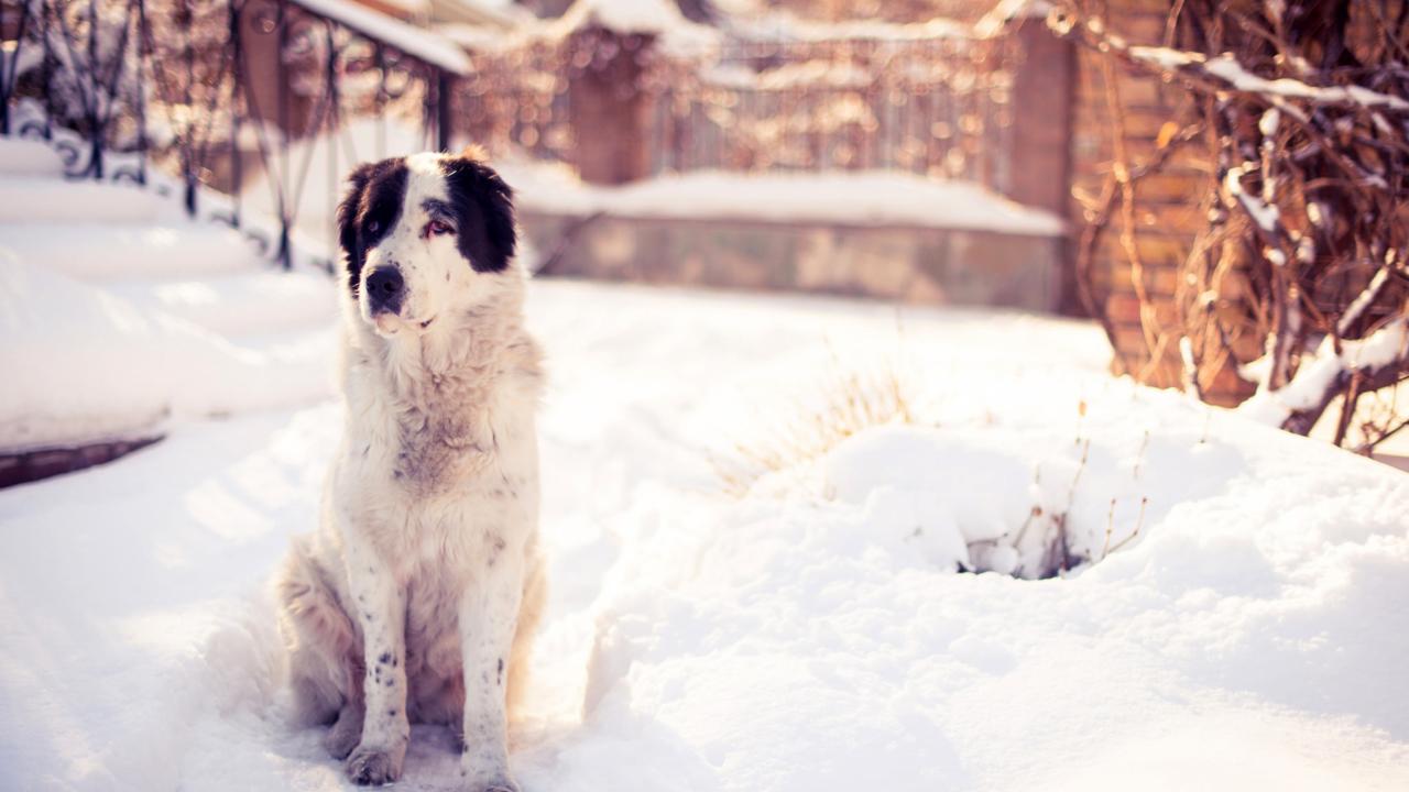 Dog In Snowy Yard