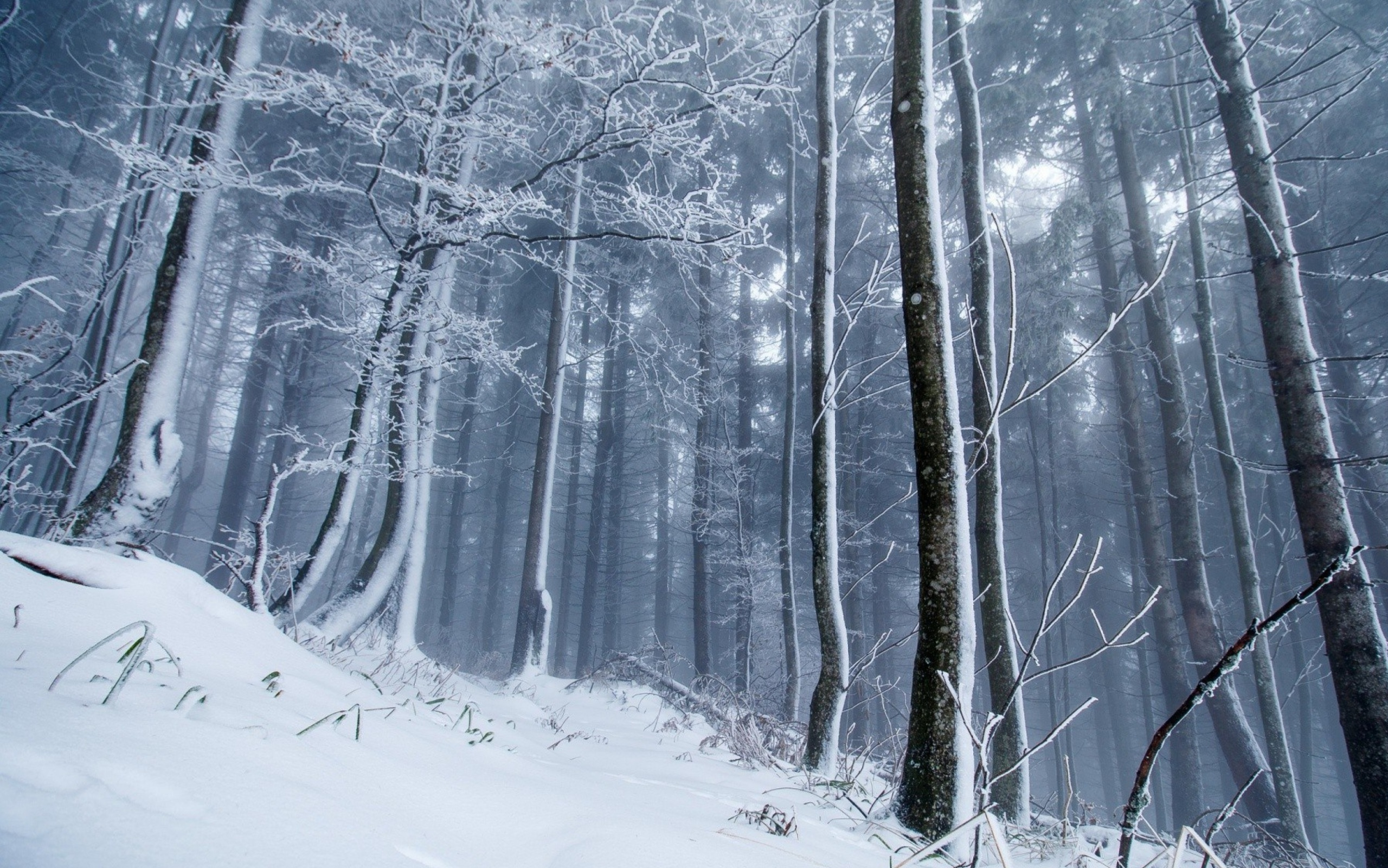 Screenshot №1 pro téma Winter Forest 2560x1600