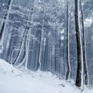 Winter Forest Wallpaper for LG KP105