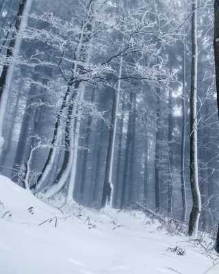 Winter Forest Picture for 320x480