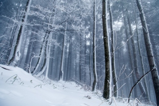Free Winter Forest Picture for Android, iPhone and iPad
