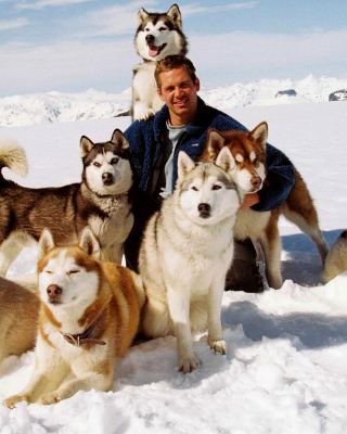 Eight Below Paul Walker sfondi gratuiti per Nokia Asha 310