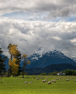 Sheeps On Green Field And Mountain View - Obrázkek zdarma pro iPhone 5C