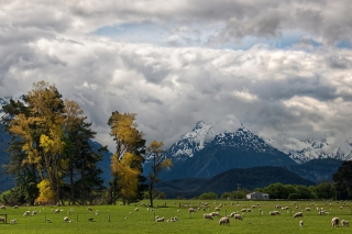 Sheeps On Green Field And Mountain View - Obrázkek zdarma pro 1024x600