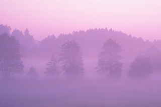 Pink Mist Background for Android, iPhone and iPad