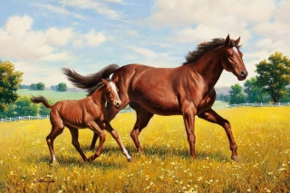 Horses Picture for Android, iPhone and iPad