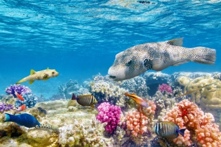 Reef World papel de parede para celular para Samsung Galaxy S3