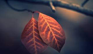 Kostenloses Two Ember Leaves Wallpaper für Android, iPhone und iPad
