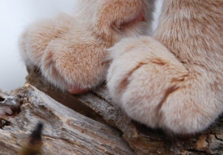 Free Furry Paws Picture for Android, iPhone and iPad