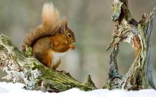 Free Squirrel With Nuts Picture for Android, iPhone and iPad
