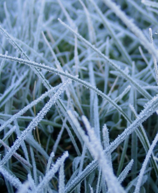 First Frost Wallpaper for HTC Titan
