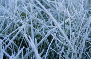 First Frost Background for Android, iPhone and iPad