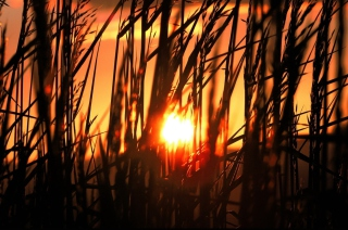 Sunrise Through Grass - Obrázkek zdarma pro Widescreen Desktop PC 1920x1080 Full HD