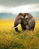 Fondo de pantalla Wild Elephant On Yellow Field In Tanzania 128x160