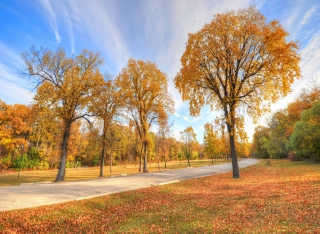 Autumn Path sfondi gratuiti per cellulari Android, iPhone, iPad e desktop