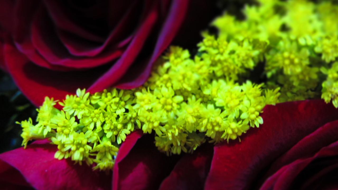Lemon Yellow Flowers