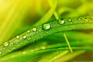 Dew on Grass Wallpaper for Motorola DROID 3