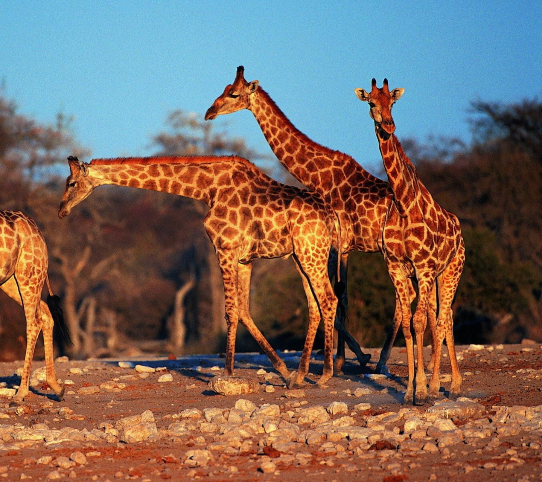 конъюнктивит картинка найдите жирафа салат