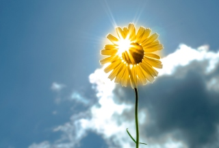 Sunny Flower Background for Android, iPhone and iPad