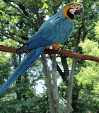 Macaw Picture for Nokia C2-02