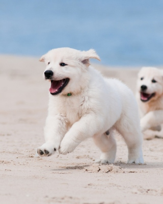 Puppies on Beach sfondi gratuiti per iPhone 4S