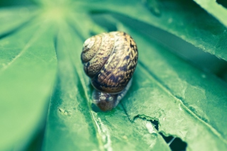 Free Snail On Plant Picture for Android, iPhone and iPad