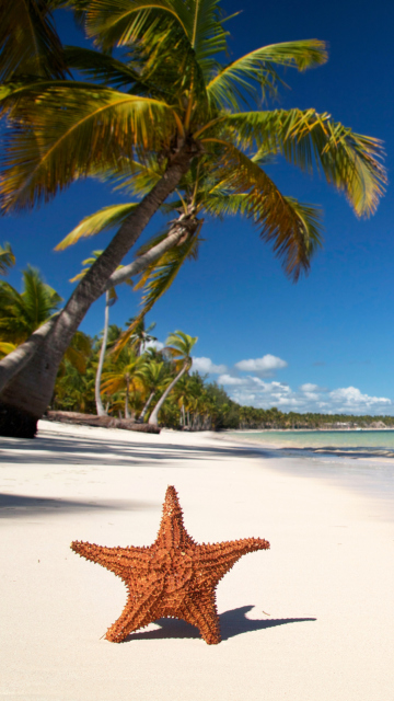 Sea-Star On The Beach