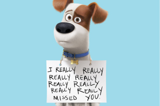 Max from The Secret Life of Pets sfondi gratuiti per Samsung Galaxy Q