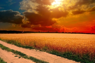 Field Sunset Picture for Android, iPhone and iPad