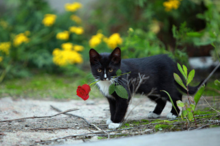 Cat with Flower sfondi gratuiti per cellulari Android, iPhone, iPad e desktop