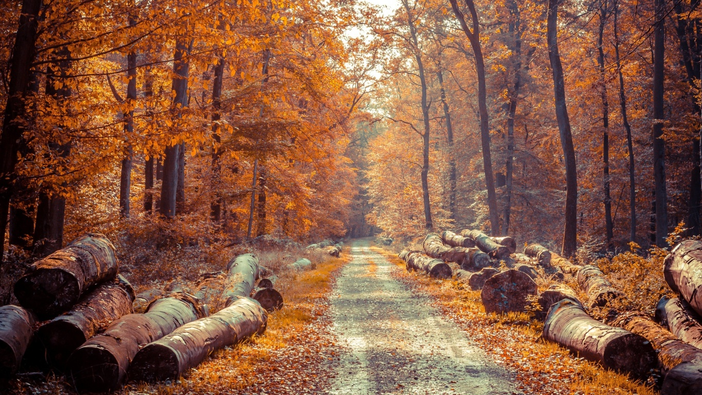 Screenshot №1 pro téma Road in the wild autumn forest 1366x768