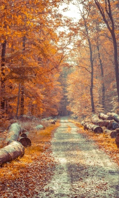 Screenshot №1 pro téma Road in the wild autumn forest 240x400