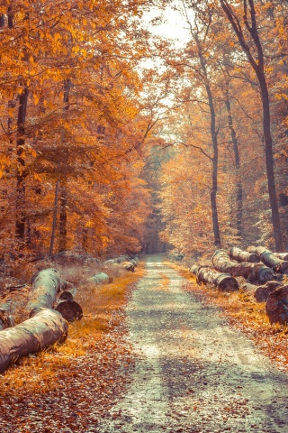 Screenshot №1 pro téma Road in the wild autumn forest 320x480