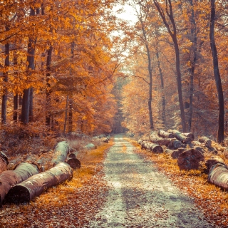 Road in the wild autumn forest sfondi gratuiti per iPad Air