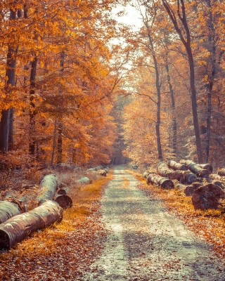 Kostenloses Road in the wild autumn forest Wallpaper für Nokia Asha 308
