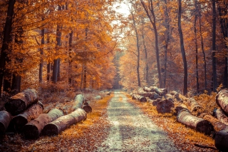 Road in the wild autumn forest Wallpaper for Android, iPhone and iPad