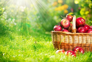 Red Apples In Basket - Fondos de pantalla gratis
