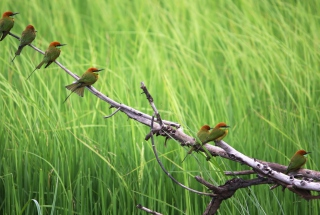 Red Headed Birds Wallpaper for Android, iPhone and iPad