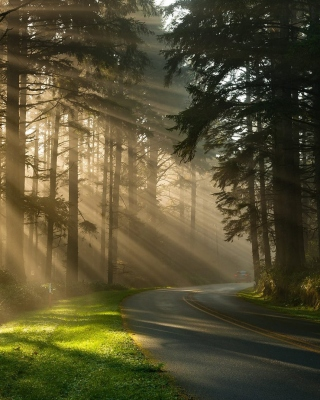 Free Mystical Forest Sunrise Picture for 240x320