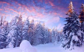 Snowy Christmas Trees In Forest Background for Android, iPhone and iPad