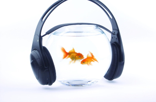 Fish Music Picture for Desktop 1280x720 HDTV