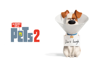 Kostenloses The Secret Life of Pets 2 Max Wallpaper für Samsung Galaxy S3