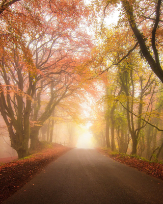 Foggy Road sfondi gratuiti per iPhone 4S