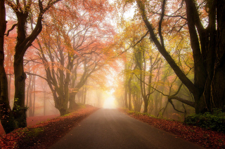 Foggy Road Background for Android, iPhone and iPad