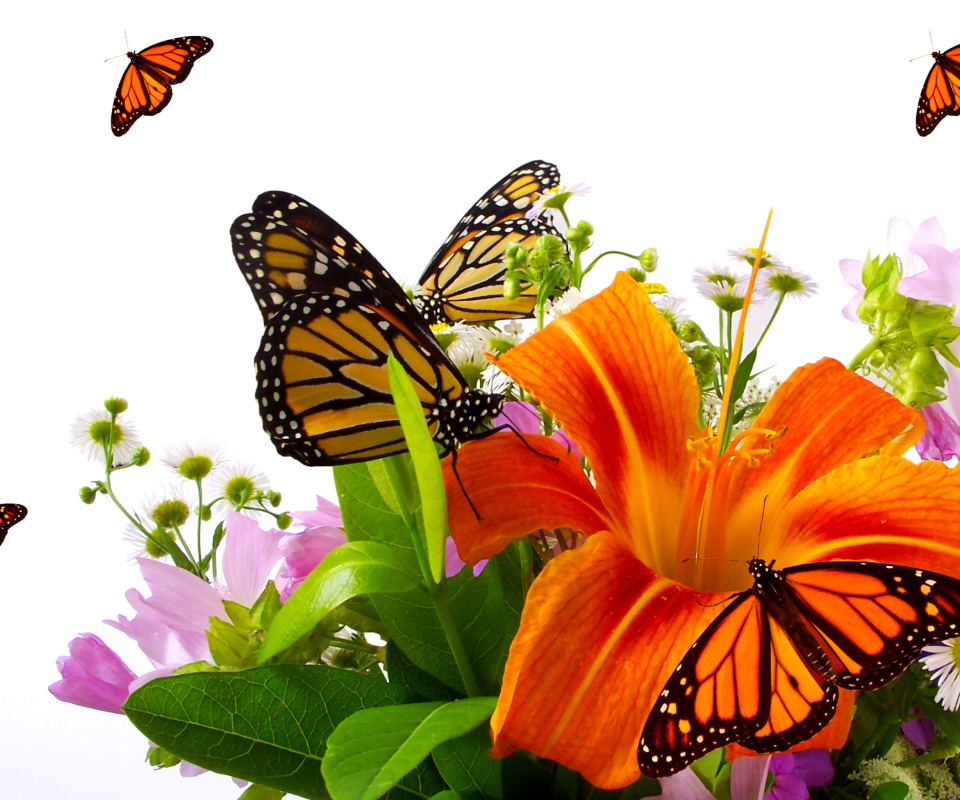 Screenshot №1 pro téma Lilies and orange butterflies 960x800