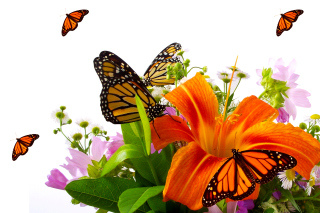 Lilies and orange butterflies papel de parede para celular para Widescreen Desktop PC 1600x900