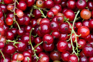 Currant Background for Android, iPhone and iPad