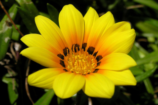Yellow Macro Flower and Petals sfondi gratuiti per cellulari Android, iPhone, iPad e desktop