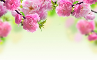 Free Pink Flowers Picture for Android, iPhone and iPad